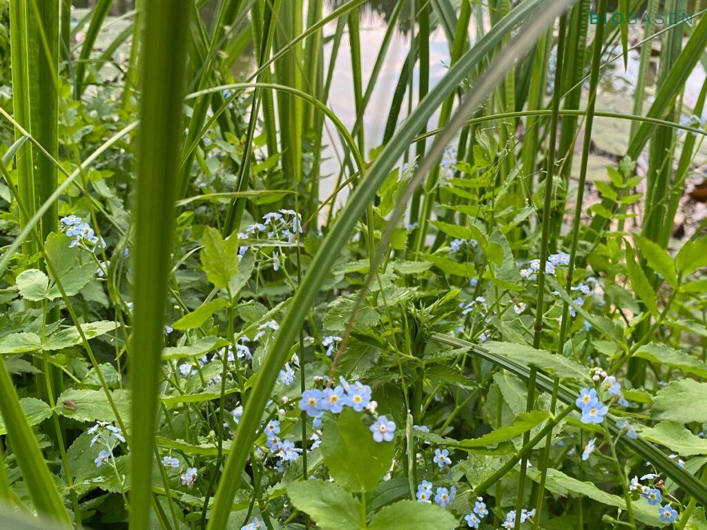 rośliny w stawie kąpielowym